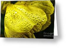 Dew On Primrose Greeting Card