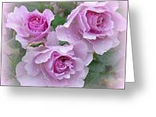 Dew On The Roses Greeting Card