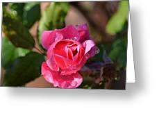 Dew Rose Greeting Card