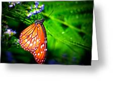 Dewdrop Butterfly Greeting Card