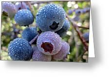 Dewy Blueberries Greeting Card