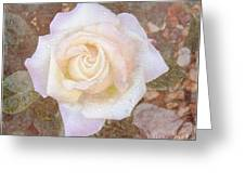 Dewy Dawn Peace Rose Greeting Card