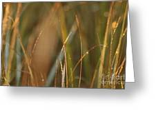 Dewy Grasses Greeting Card