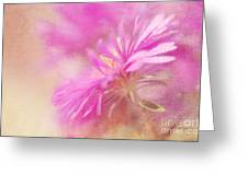 Dewy Pink Asters Greeting Card by Lois Bryan