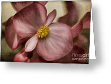 Dewy Pink Painted Begonia Greeting Card