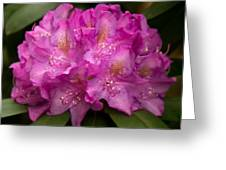 Dewy Rhododendron Greeting Card