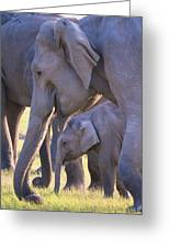 Dhikala Elephants Greeting Card