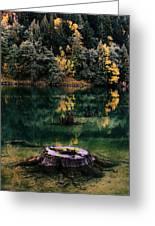 Diablo Lake Tree Stump Greeting Card