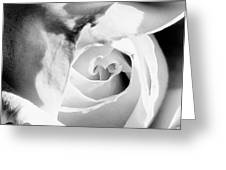 Diamond Rose Bw Palm Springs Greeting Card