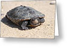 Diamondback Terrapin Turtle Greeting Card by Diane Rada