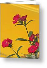 Dianthus At The Door Greeting Card