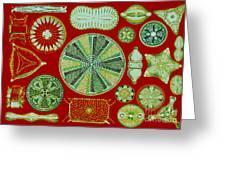 Diatoms-ernst Haeckel Greeting Card