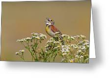 Dickcissel On Wild Daisies Greeting Card