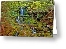 Dickson Falls In Fundy Np-nb Greeting Card