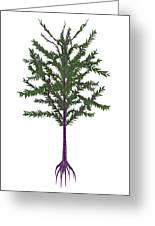 Dicroidium Prehistoric Seed Plant Greeting Card