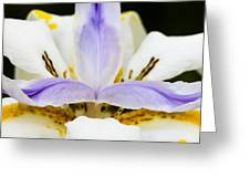 Dietes Grandiflora Close-up Greeting Card