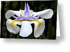 Dietes Grandiflora Full Greeting Card