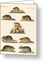 Different Kinds Of Mice Greeting Card