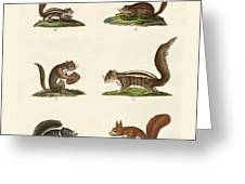Different Kinds Of Squirrels Greeting Card