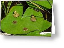 Different Stages Of Frog Growth Greeting Card