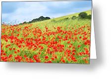 Digital Art Field Of Poppies Greeting Card by Natalie Kinnear