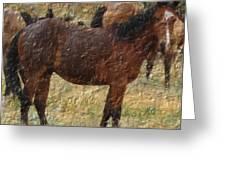 Digital Oil Painting Horses Greeting Card