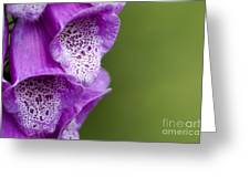 Digitalis Abstract Greeting Card by Anne Gilbert