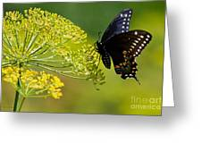 Dill And The Butterfly Greeting Card