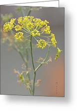Dill Blossom Greeting Card