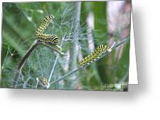 Dillweed And Caterpillars Greeting Card