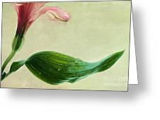 dim colours II Greeting Card