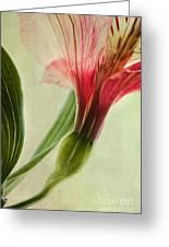 Dim Colours Greeting Card
