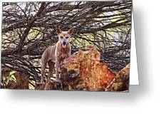 Dingo In The Wild V5 Greeting Card
