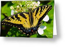 Dinner For The Swallowtail Greeting Card