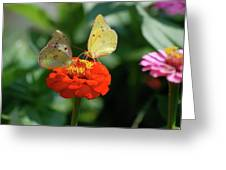 Dinner Table For Two Butterflies Greeting Card