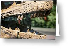 Dinosaur Jaws Exhibit Greeting Card