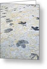 Dinosaur Tracks Greeting Card