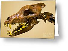 Dire Wolf Skull Fossil Greeting Card