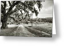 Dirt Road On Coosaw Plantation Greeting Card
