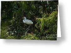 Dirty Bird Greeting Card