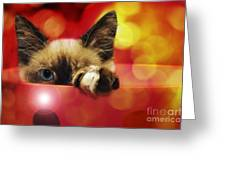 Disco Kitty 1 Greeting Card