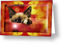 Disco Kitty 2 Greeting Card