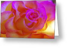 Disco Rose   Greeting Card