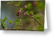 Distant Hummingbird Greeting Card