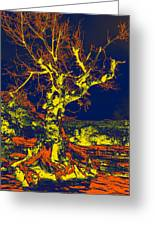 Dried Up Tree Greeting Card