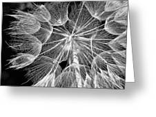 Ditch Lace Bw Greeting Card