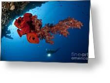 Diver Looks On At A Bright Red Soft Greeting Card