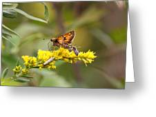 Diversity - Insects Greeting Card