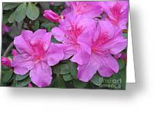 Divine Lilac Azalea Greeting Card