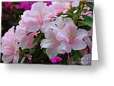 Divine Pink Azalea Greeting Card